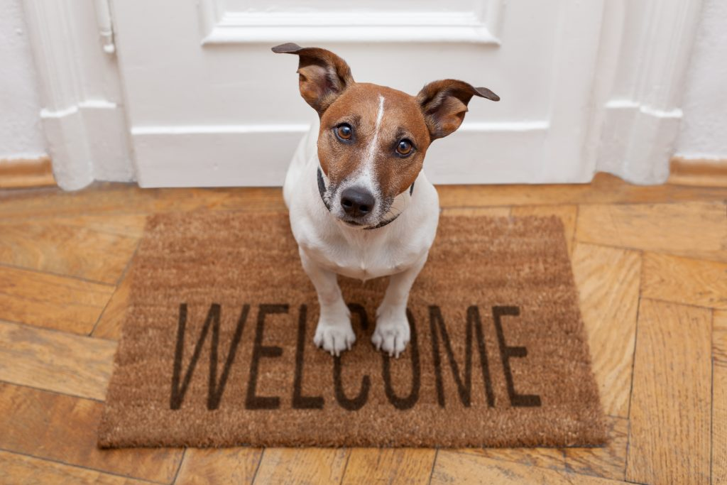 Friendly dog on a welcome mat
